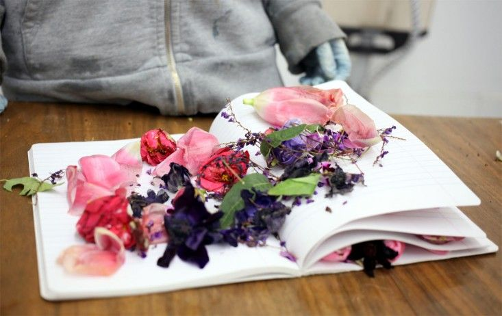 Pressed Flowers for Natural Dye | Gardenista