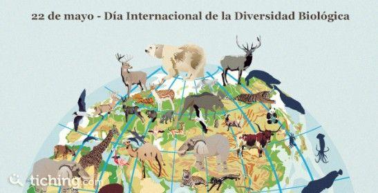 Diversidad Biologica | Tiching