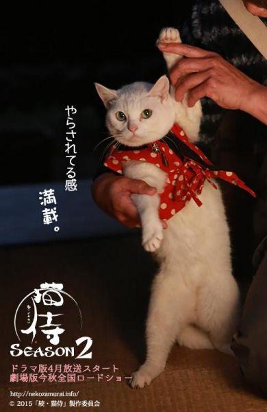 cute kitten  あなごさん                                                                                                                                                     もっと見る