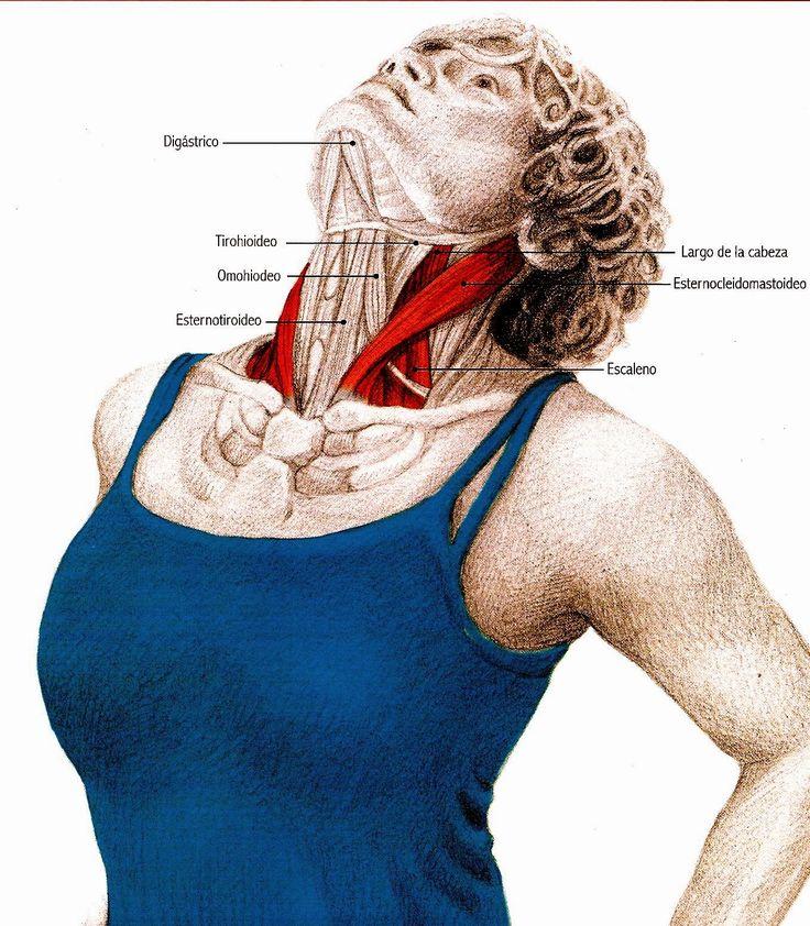 Un blog dedicado sobre todo al mundo Pilates, salud postural, estiramientos, ejercicios de rehabilitación y Stretching Global Activo(SGA).