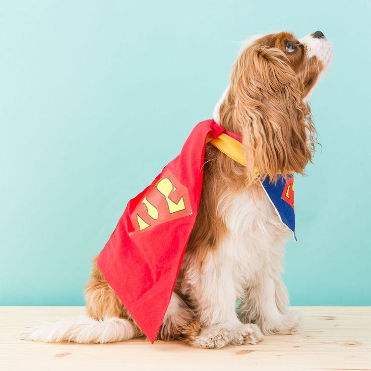 DIY a superhero costume for your pup with this tutorial.