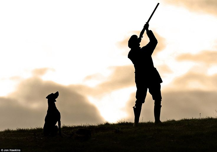 In his master's shadow: Jon Hawkins also impressed as runner up in the dog at work competition with this image of alert Pointer/Labrador gun...