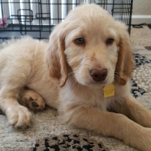 Belle at 8 weeks