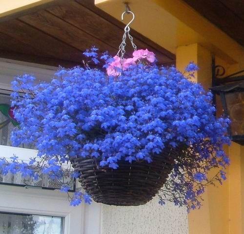 подвесные кашпо с отверстиями для ампельных цветов: 14 тыс изображений найдено в Яндекс.Картинках