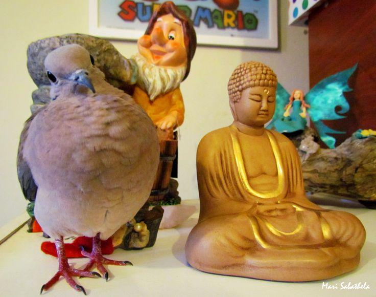 Norman, The Buddhist Bird