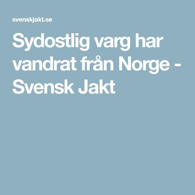 Sydostlig varg har vandrat från Norge - Svensk Jakt