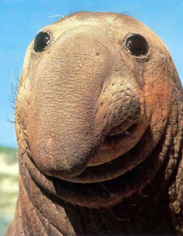Secret To Happiness: Good humor, kindness, relentless optimism, and a long floppy nose-like facial appendage.