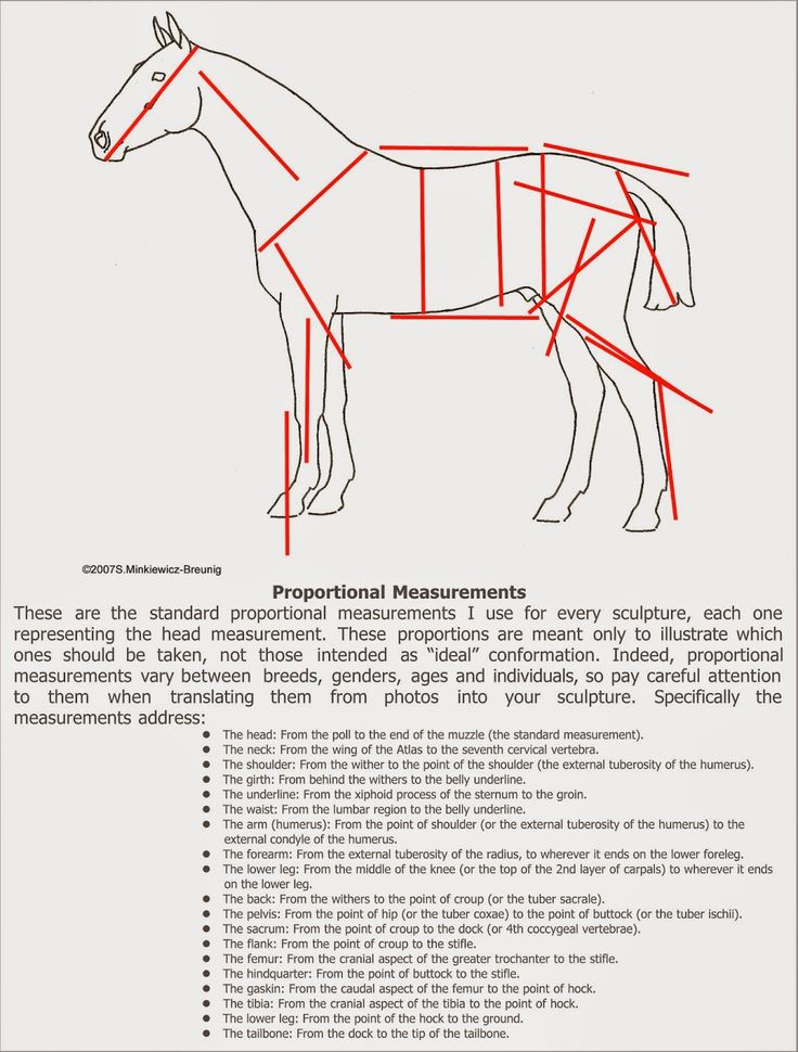 94 Best Sculpting Reference Images On Pinterest Horse Anatomy