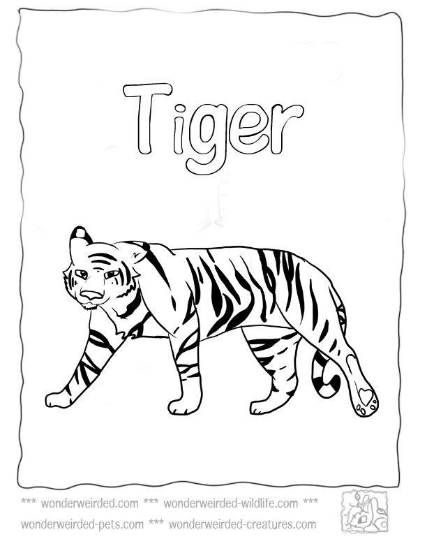 Cartoon cute tiger coloring page Royalty Free Vector Image   792x612