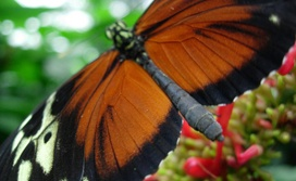 Butterfly conservatory discount coupon