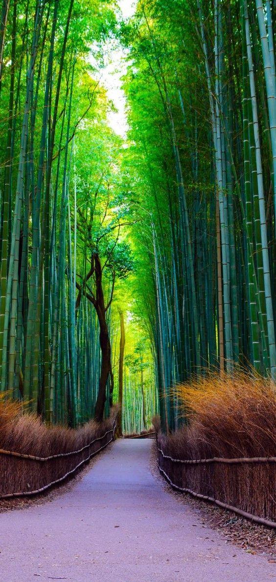 wallpapers de fotos de paisajes naturales