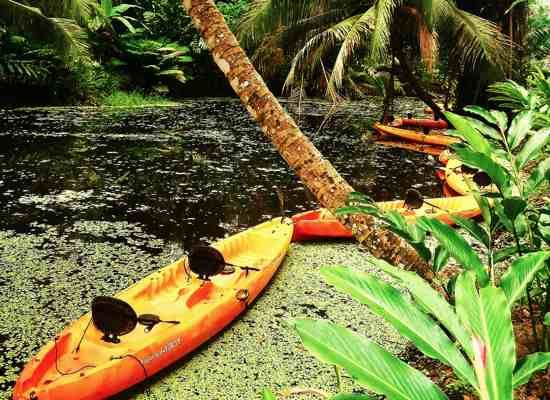 Jungle Kayaking Adventure in Puerto Limon, Costa Rica. #PanamaCanal #Excursion