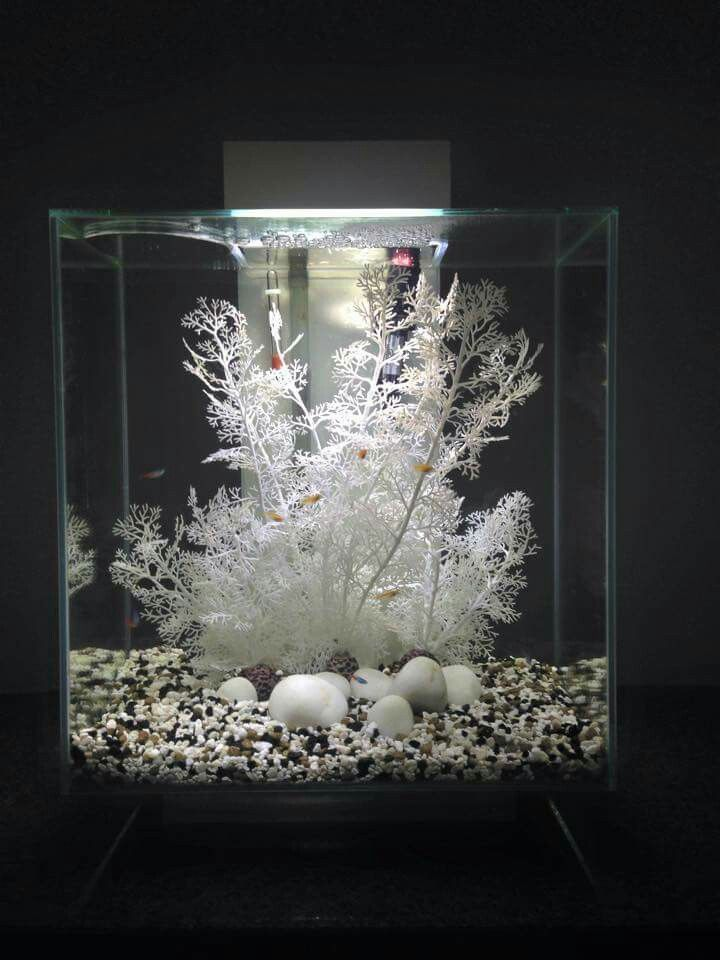 Home Aquarium Ideas: The Aquarium Buyers Guide Fluval Edge                                                                                                                                                                                 More