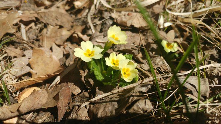 TURKEY-KARABÜK  Huzur çiçeğimiz
