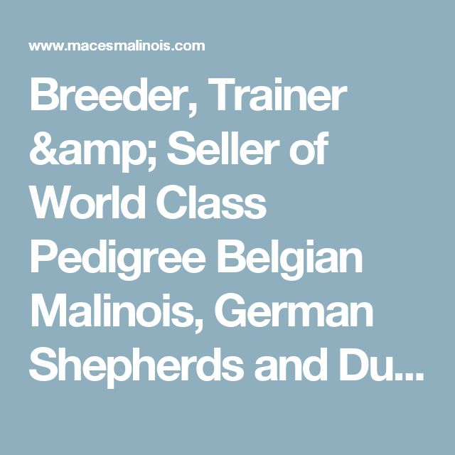 Breeder, Trainer & Seller of World Class Pedigree Belgian Malinois, German Shepherds and Dutch Shepherds. Puppies, Personal Protection Dogs and Service Dogs | Ocala Florida