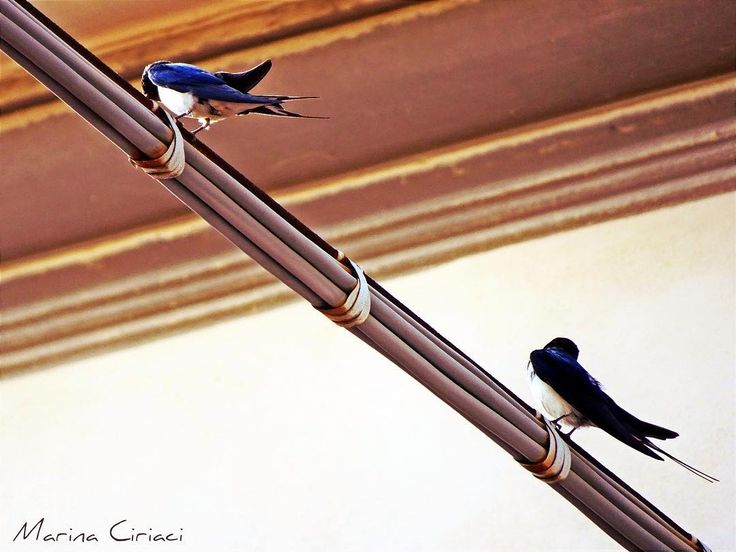 I Love Via dell'Ambrogiana.  #photographer #photooftheday #pic #summer #photo #l4l #likeforlike #igersitalia #igers #igerstoscana #igerslivorno #rondini #birds