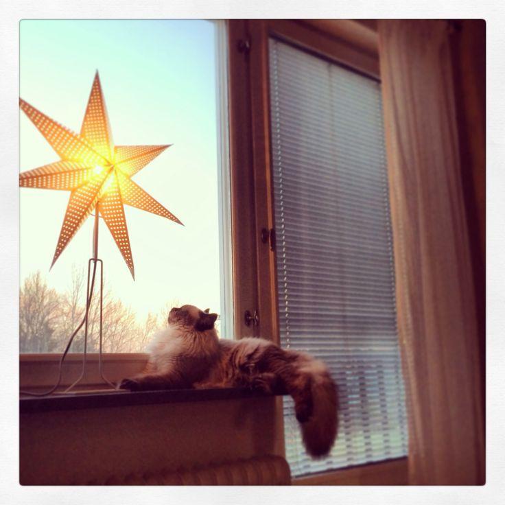 Bruce beundrar stjärnan i fönstret.