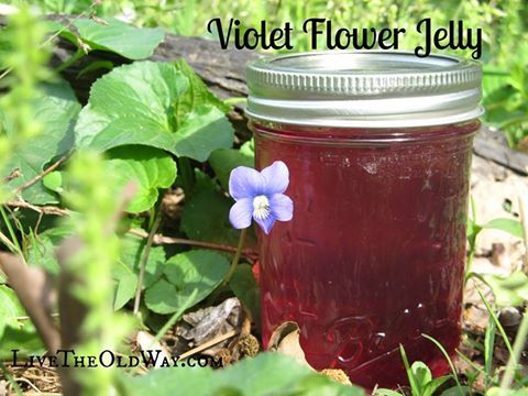 This is awesome, now that the violets are everywhere! Violet Flower Jelly - Live The Old Way http://livetheoldway.com/violet-jelly/