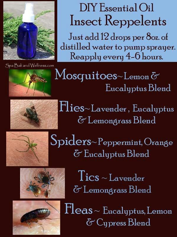 Best 25 natural mosquito repellant ideas on pinterest - Natural insect repellent for gardens ...