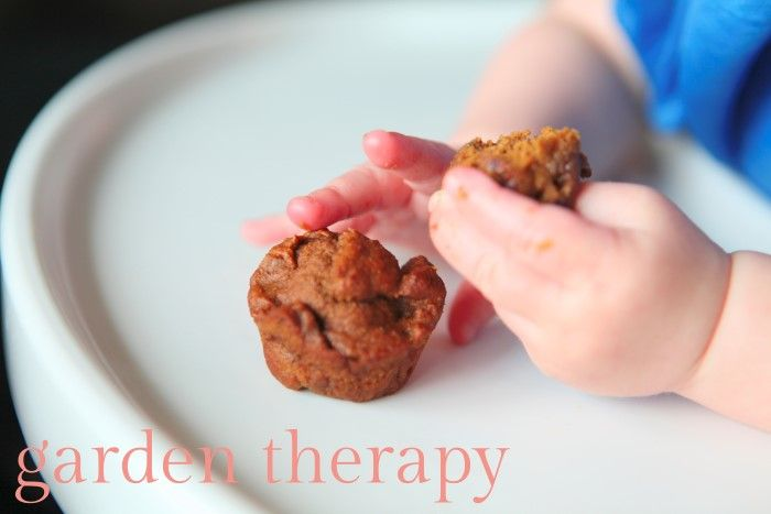Iron Muffins for Babies with apricot, pumpkin, oatmeal, blackstrap molasses and more