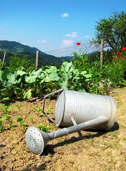 Beginning farmers guide for preparing for drought. These five steps will help you store and conserve water so your farm will continue producing during times of drought. Organic Gardening, Gardening Tips, Vegetable Gardening, Flower Bed Designs, Small Space Gardening, Hobby Farms, Earth Day, Watering Can, Farm Life