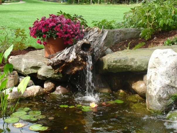Many uses for driftwood backyard water pinterest for Wooden pond waterfalls