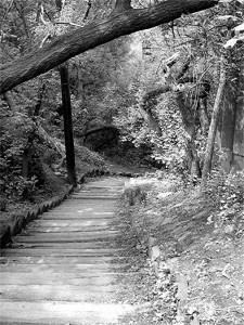 Spadina Ravine pathway, Toronto