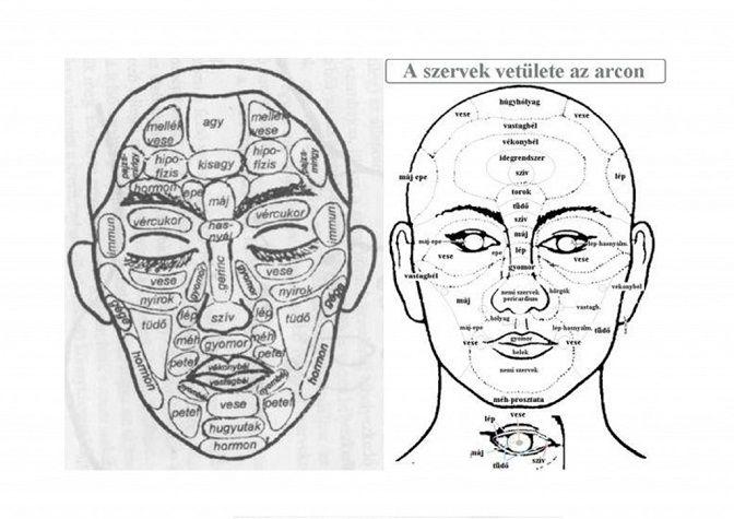 Arcunkon nem csak az érzelmek mutatkoznak meg, hanem a hiánybetegségek is. Cikkünkben az 5000 éves múlttal rendelkező kínai arcdiagnosztikára támaszkodva a betegségekre utaló jeleket vesszük sorra.Ahogy a talpon, a tenyéren, a fülön, vagy a szemíriszen, úgy az arcon is ott rejtőznek láthatatlanul testünk belső szervei. Így, aki ennek tudatában van, akár saját magát is elemezheti, ha megjelenik az arcán valamilyen elváltozás. A kínai arcdiagnosztikát figyelembe v
