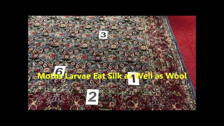 How to prevent moth damage on silk rugs....
