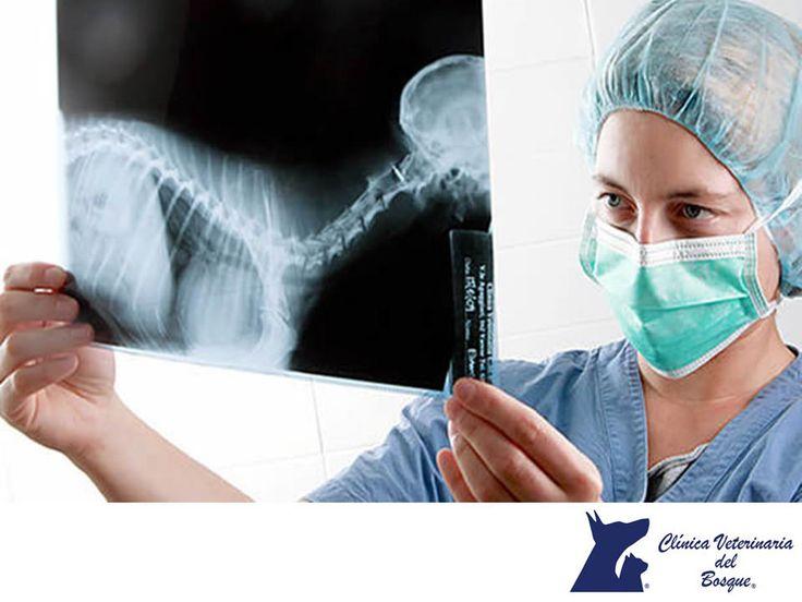 LA MEJOR CLÍNICA VETERINARIA DE MÉXICO. ¿Qué es la imagenología? La radiología es una rama de la medicina que utiliza la tecnología imagenológica para diagnosticar y tratar una enfermedad. Se puede dividir en dos áreas diferentes: radiología diagnóstica y radiología intervencionista. En Clínica Veterinaria del Bosque, contamos con equipo de alta calidad para realizar este tipo de estudios para tu mascota. #veterinaria