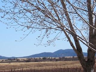 Take a taste trip down to Arizona's only AVA.Arizona Wine, Grape Vines, Taste Trips, Vines Growing, Cows Grazing