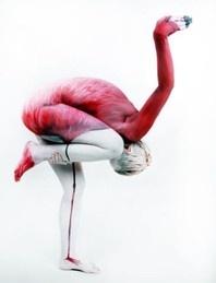 Galerie - Gesine Marwedel Bodypainting; human flamingo. Photo by Thomas van de Wall