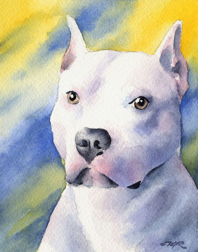 bull terrier artist 161 best my max the pit bull advocate images on pinterest 5123