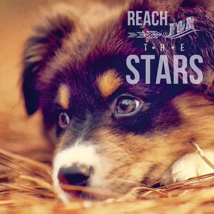Believe in yourself and reach for the stars!