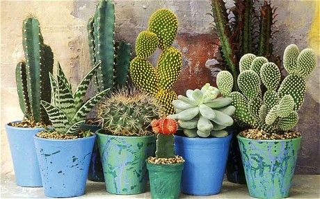 A display of cactuses and succulents - The beauty of cactuses