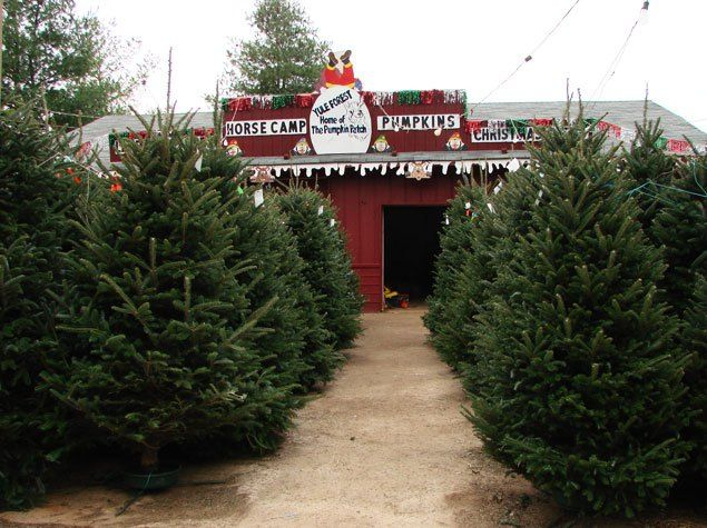 8 Great Christmas Tree Farms Near Atlanta Christmas Tree Farm Tree Farms Christmas Tree