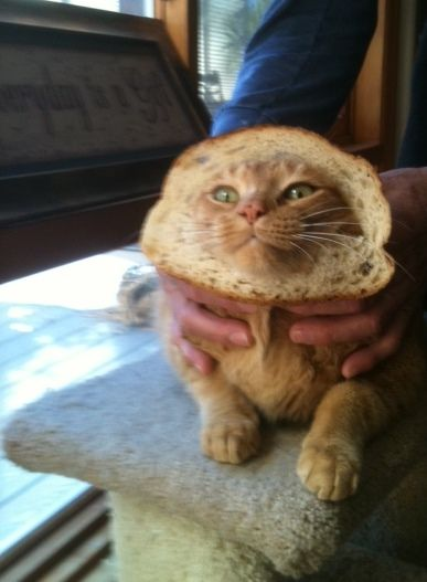 26 best images about bread cats on Pinterest  |Cat French Bread