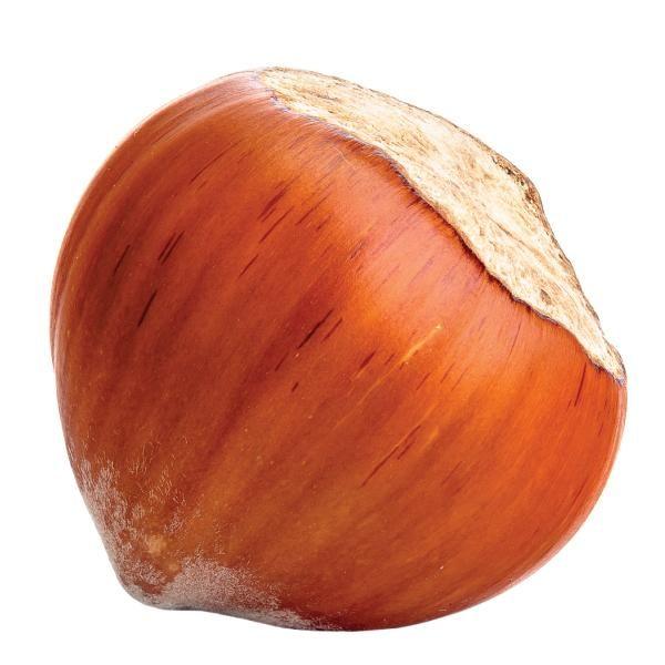 Картинка один лесной орех