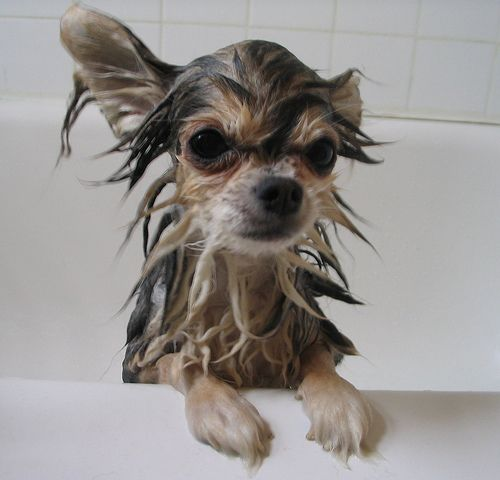 Homemade pet shampoo    Ingredients  2 cups non-toxic dishwashing liquid  2 cups water  2cups apple cider vinegar  4 ounces glycerin  Combine all ingredients in an airtight container (an old dishwashing or shampoo bottle will be perfect). Make sure the container is clearly labeled and stored out of reach of children. Shake well before using.