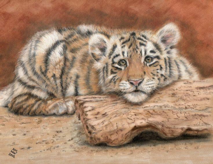Caspian tiger cub