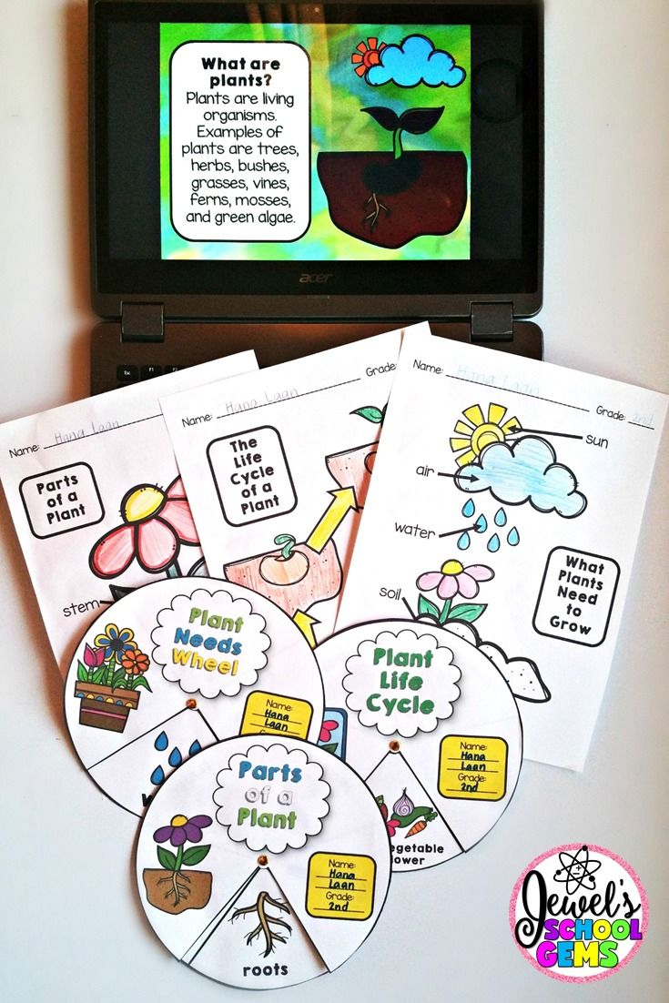 How to Teach Plants for Kids by Jewel Pastor of Jewel's School Gems   Read about different ways and grab freebies!