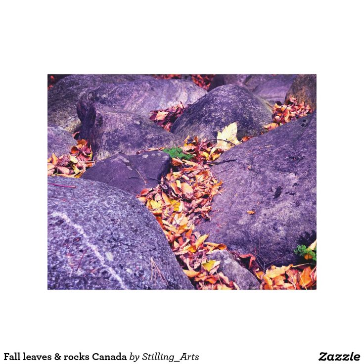 Fall leaves & rocks Canada Canvas Print