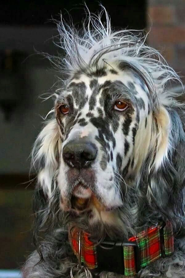 33 Unusual Dog Markings Dog Shots Dogs Beautiful Dogs