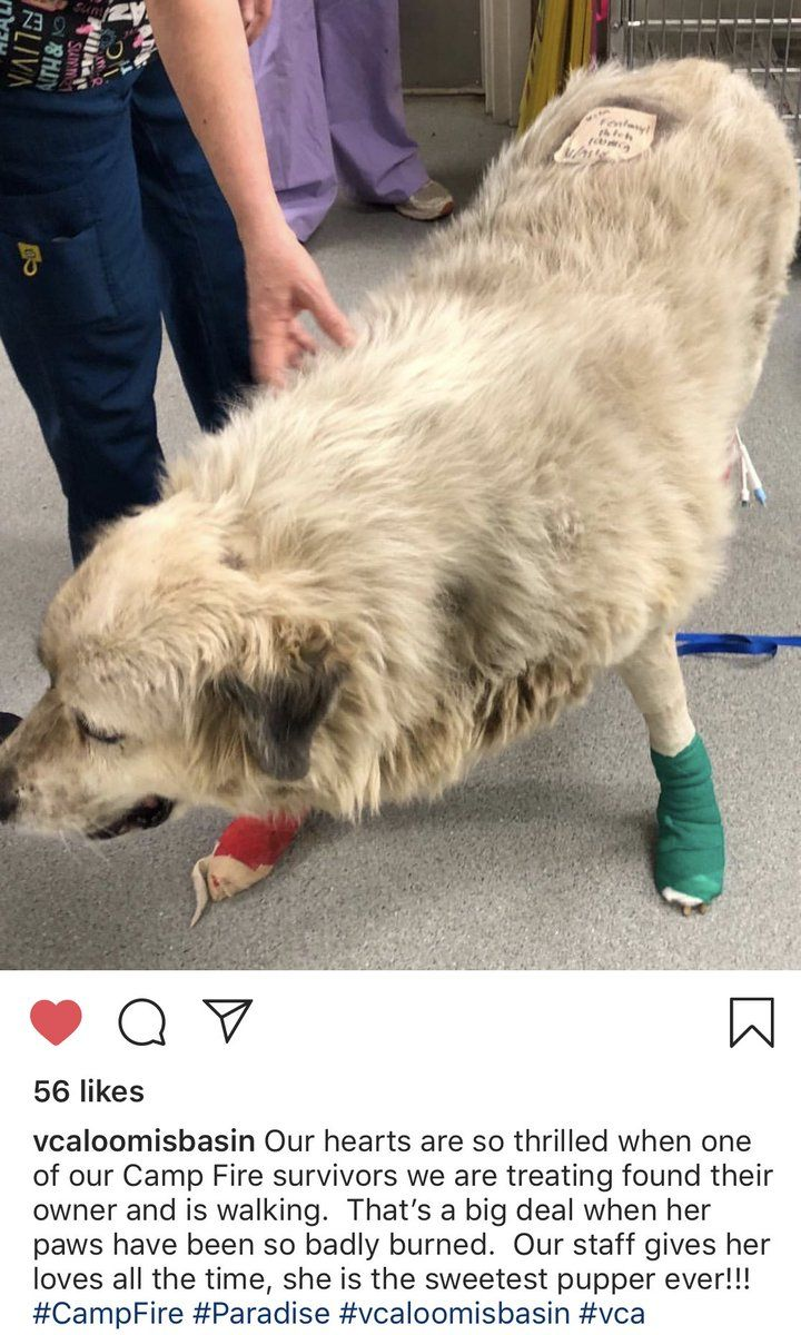 Here Is A Pup Who Was Rescued From The California Fires Her Paws
