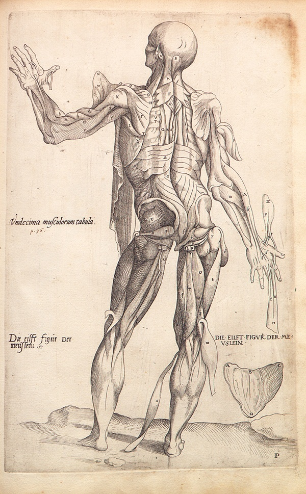 'De Humani Corporis Fabrica' - Andreas Vesalius, 1543