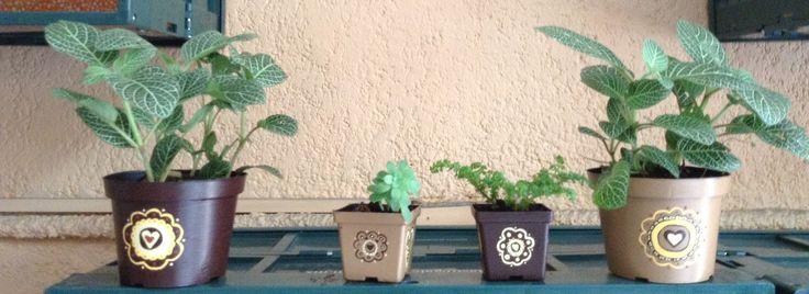 Originales centros de mesa y recuerdos de tu evento. Puedes enviarnos tu diseño y elegir el tipo de planta que prefieras. Informes y cotizaciones: ventanaverdemex@gmail.com
