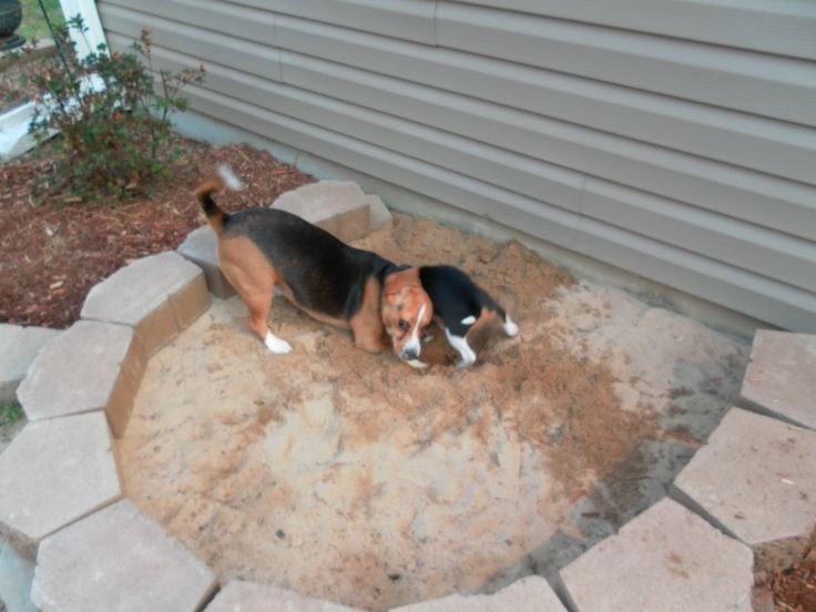 Have dogs that dig? Build them their own sandbox! Safely let them dig away.