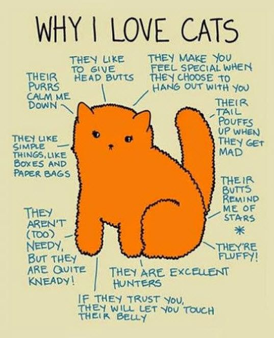 I think that just about covers it! #catlover #cats