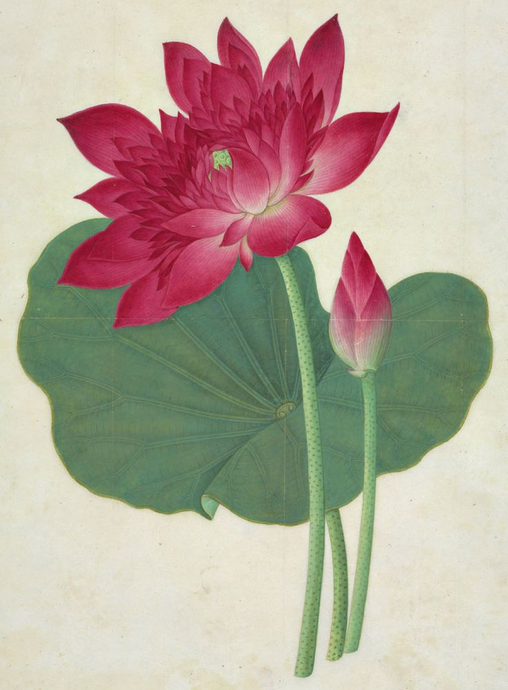 Artist Unknown, Sacred Lotus, 19th century Chinese Watercolou.r