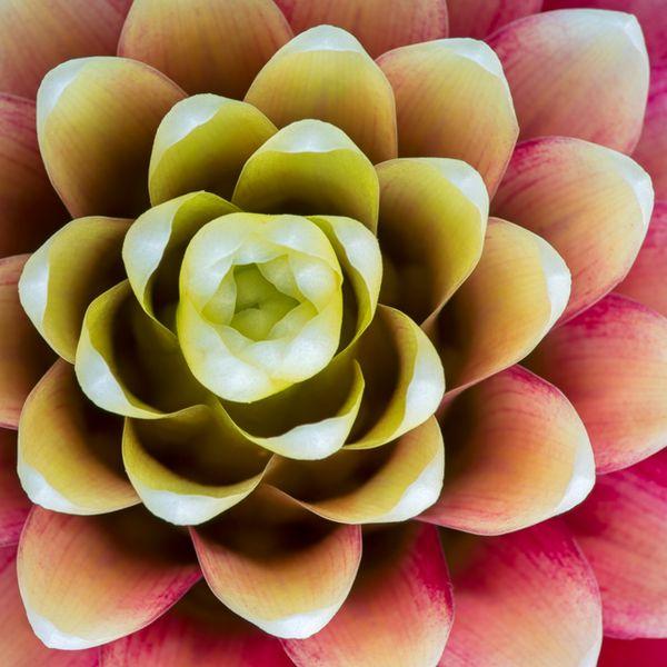 Esta flor es para ti: el significado de 8 flores | eHow en Español